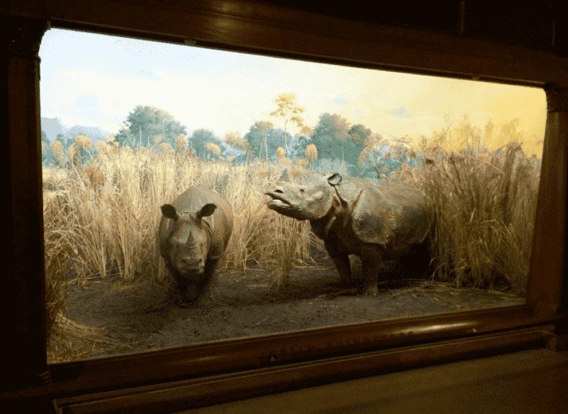 O que ver no segundo andar do Museu de História Natural em Nova York