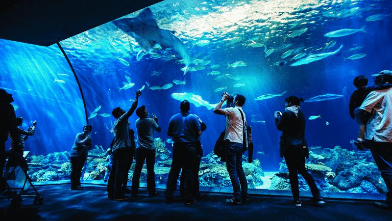 Atrações do Shedd Aquarium