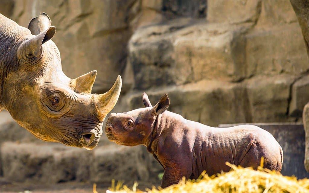 O que ver no Zoológico Lincoln Park Zoo