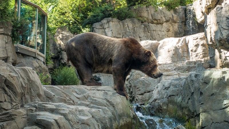 O que ver no Zoológico do Central Park