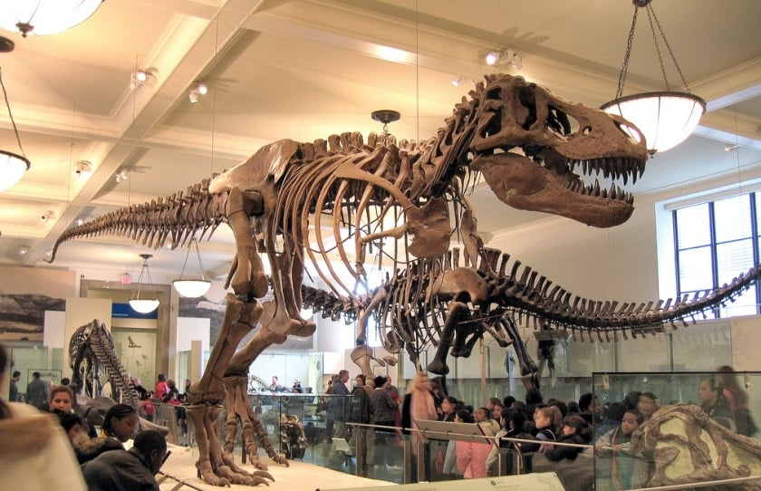 New York CityPass - Museu Historia Natural