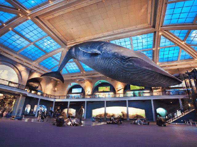 Museu de História Natural em Nova York