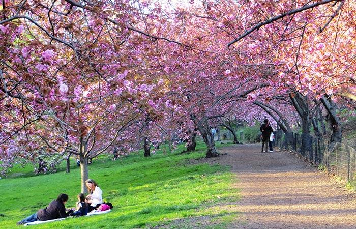 Primavera de Nova York