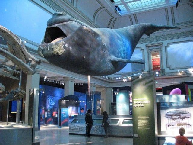 Ingressos para o Museu de História Natural de Nova York