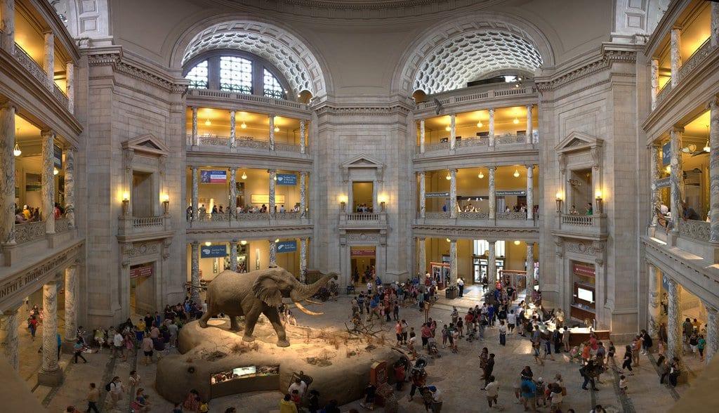 Conhecer o Museu Nacional de História Natural em Washington