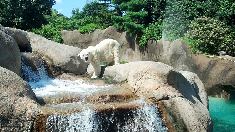 Zoológico da Filadélfia